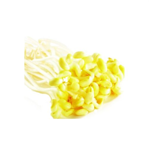 Yellow beansprouts/Gelbe Sojakeirr