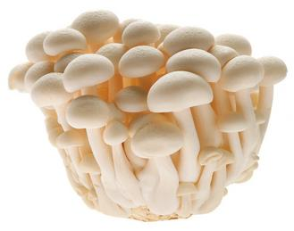 CN Snow White Mushrooms